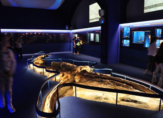 Sala della Balena, Museo di Storia Naturale - Sezione di Geologia e Paleontologia Sistema Museale UNIFI