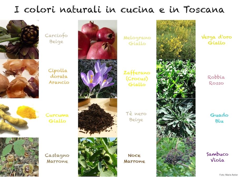 piante_tintorebasso