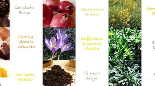 piante_tintoree_banner